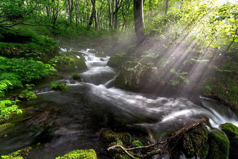 Brook, Torrent, Beech Forest, Morning Light, Glow