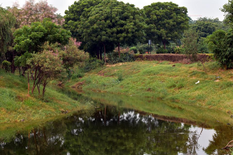 Trees, Reflection, Pond, Brook, Nature, Morning
