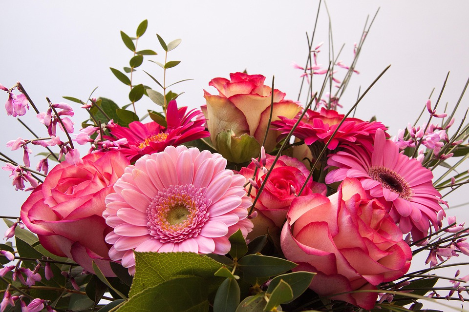 Roses, Gerbera, Composites, Broom, Genista, Flowers