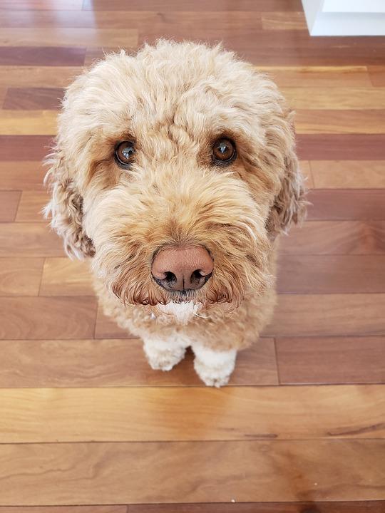 Brown, Adorable, Animals, Eyes, Eye, Happy, Dog