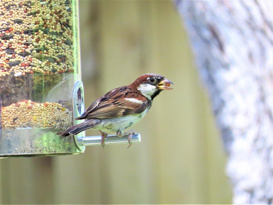 Bird, Brown And Tan, Cute, Wildlife