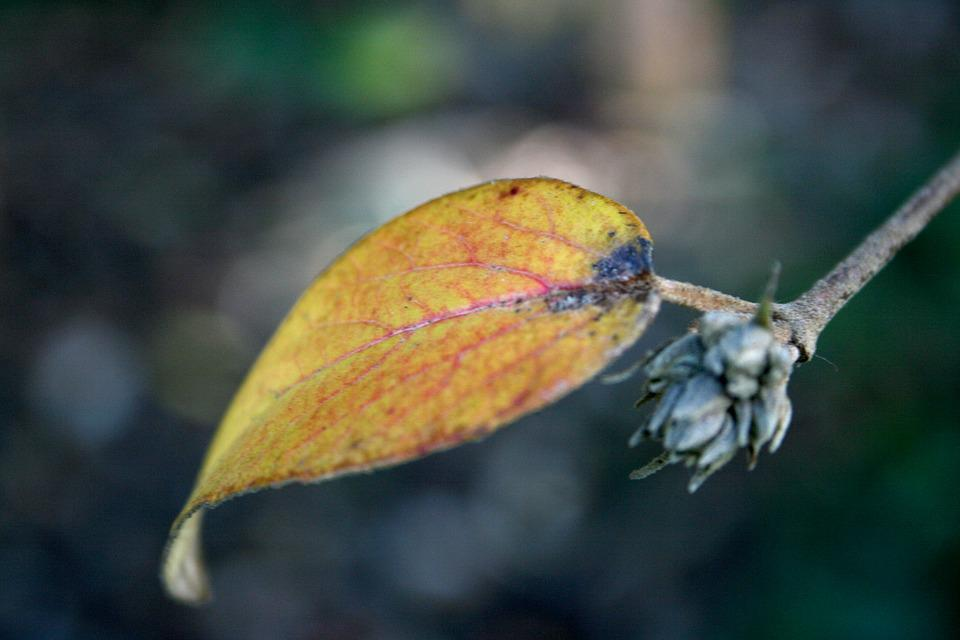 Leaves, Autumn, Nature, Leaf, Brown, Fall