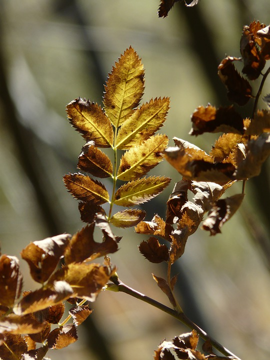 Leaves, Autumn, Fall Color, Coloring, Yellow, Brown