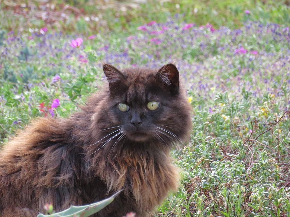 Cat, Black, Hair, Long, Cute, Eyes, Yellow, Brown