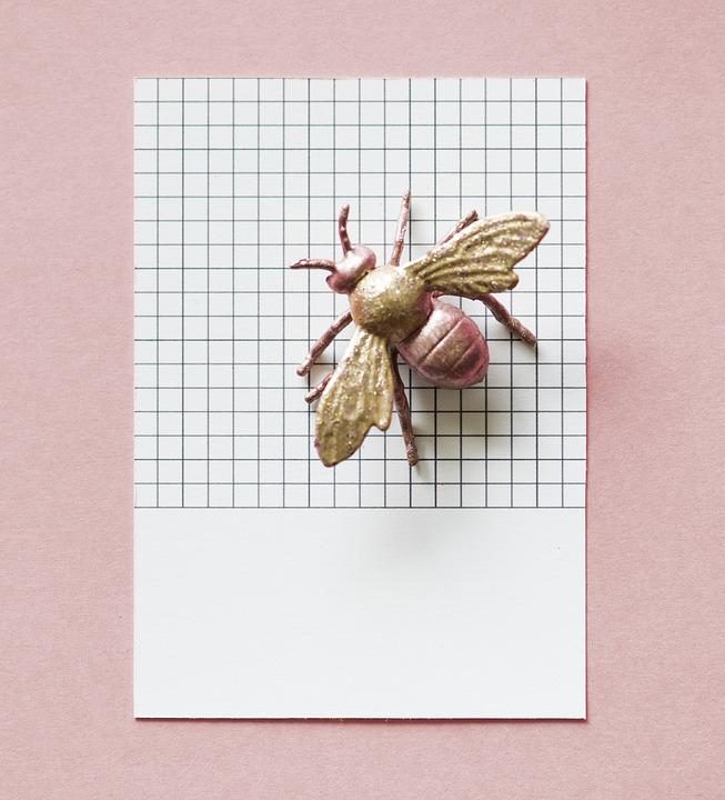 Paper, Abstract, Animal, Background, Brown, Bug, Card