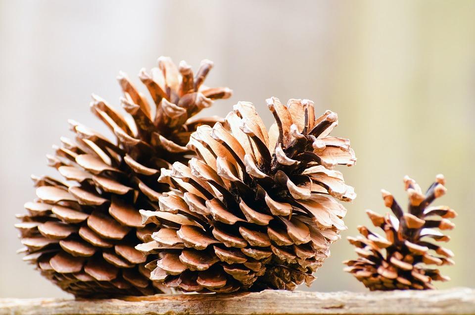 Autumn, Background, Brown, Celebration, Christmas, Cone