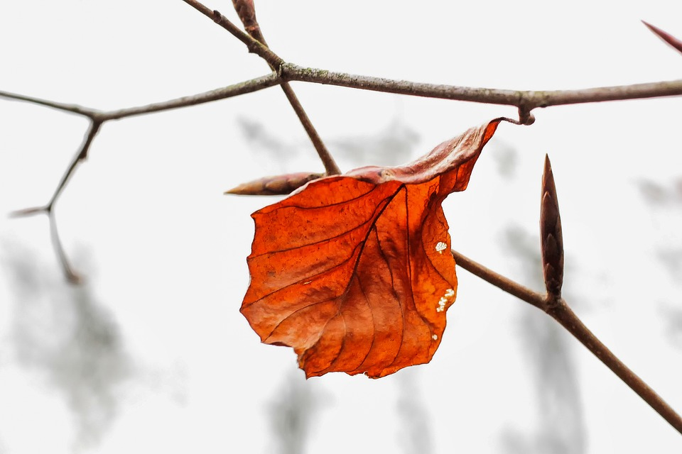 Nature, Leaf, Brown, Dry, Fall Foliage, Transience