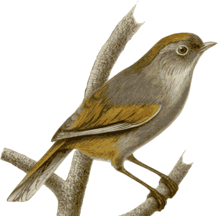 Sparrow, Bird, Feathers, Animal, Brown, Sitting, Twig