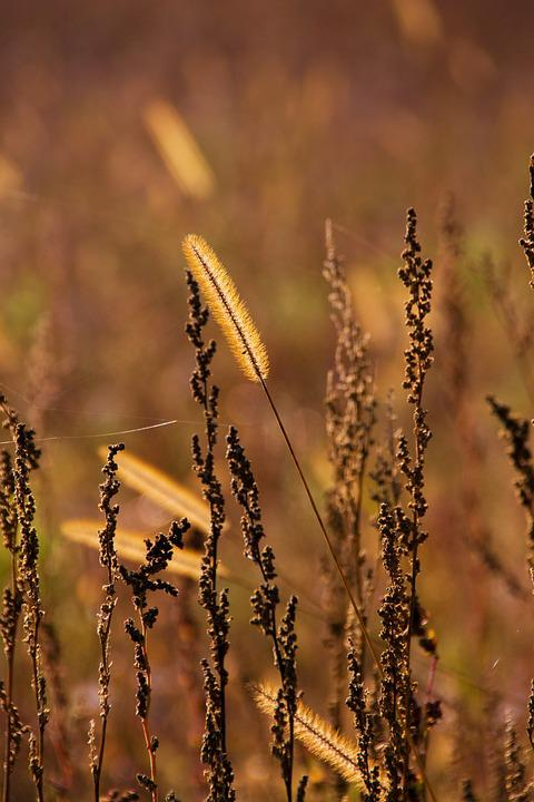 Grass, Autumn, Brown, Nature, Meadow, Field