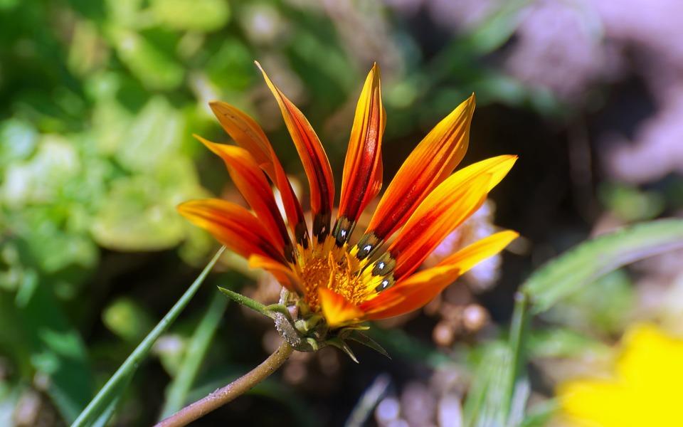 Flower, Petals, Shades, Red, Yellow, Orange, Brown