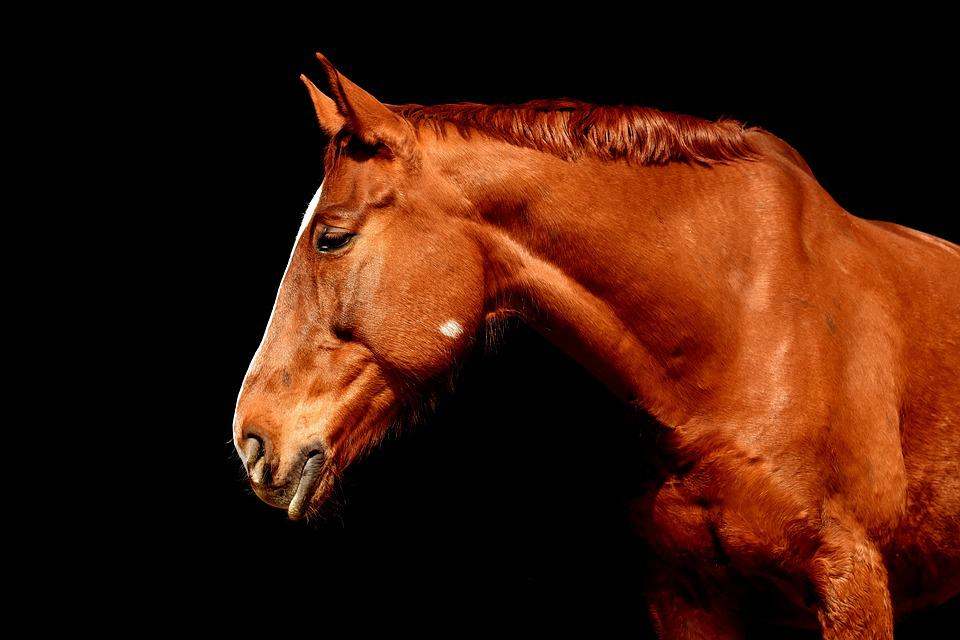 Horse, Brown, Portrait, Beautiful, Animal, Animal World
