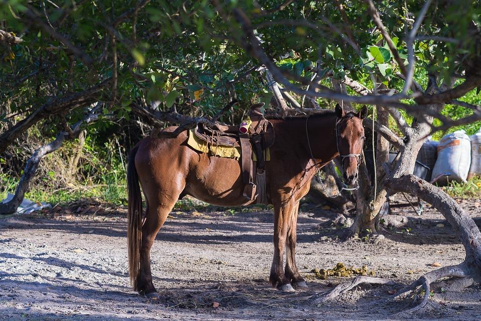 Animal, Horse, Brown Horse, Sweet, Palms