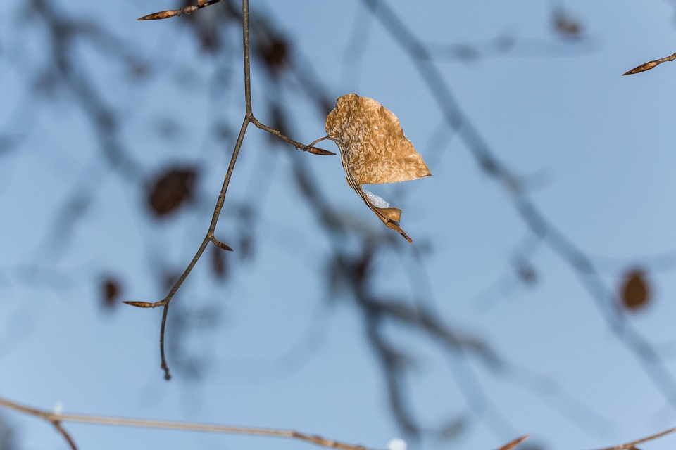Leaf, Branch, Tree, Aesthetic, Branches, Brown, Kahl
