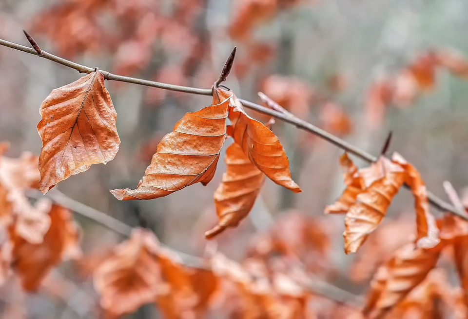 Leaves, Nature, Autumn, Tree, Brown, Fall Foliage, Dry