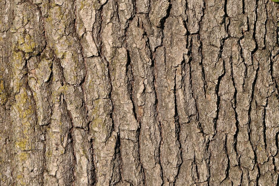 Tree Bark Forest Nature Pattern Structure Brown