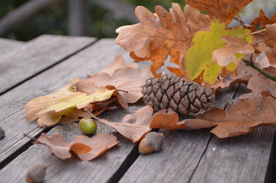 Pine Cone, Autumn, Leaf, Oak, Brown, Acorn, Branch