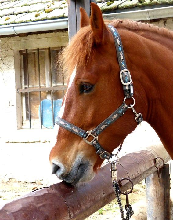 Horse Head, Graceful, Portrait, Brown