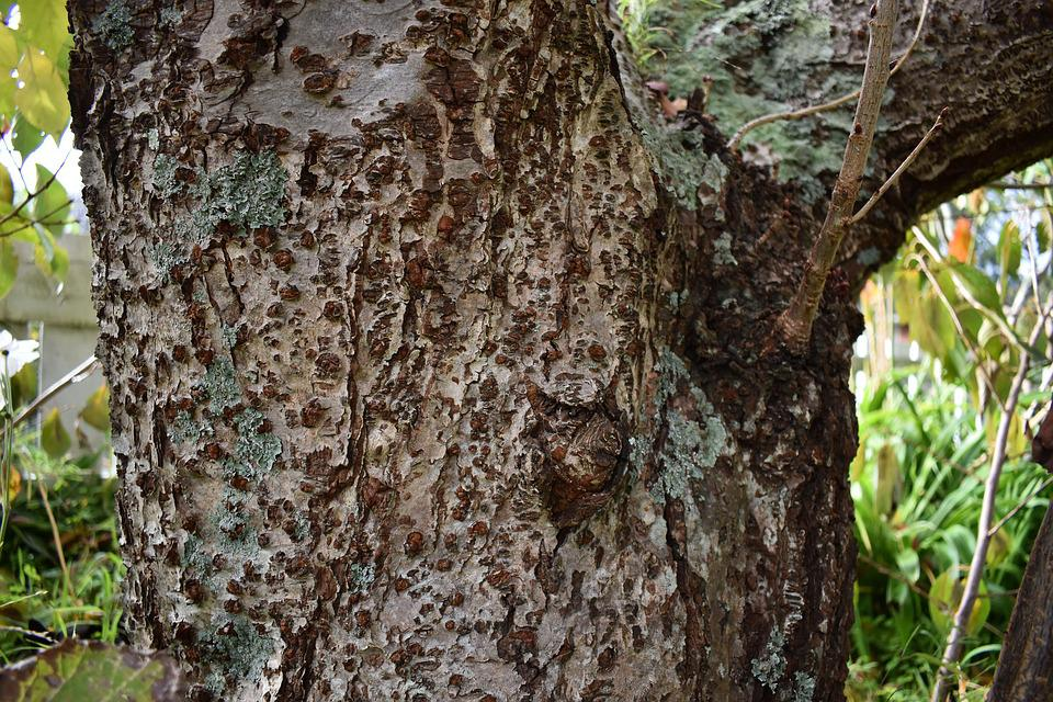 Bark, Tree, Nature, Wood, Forest, Texture, Brown, Old