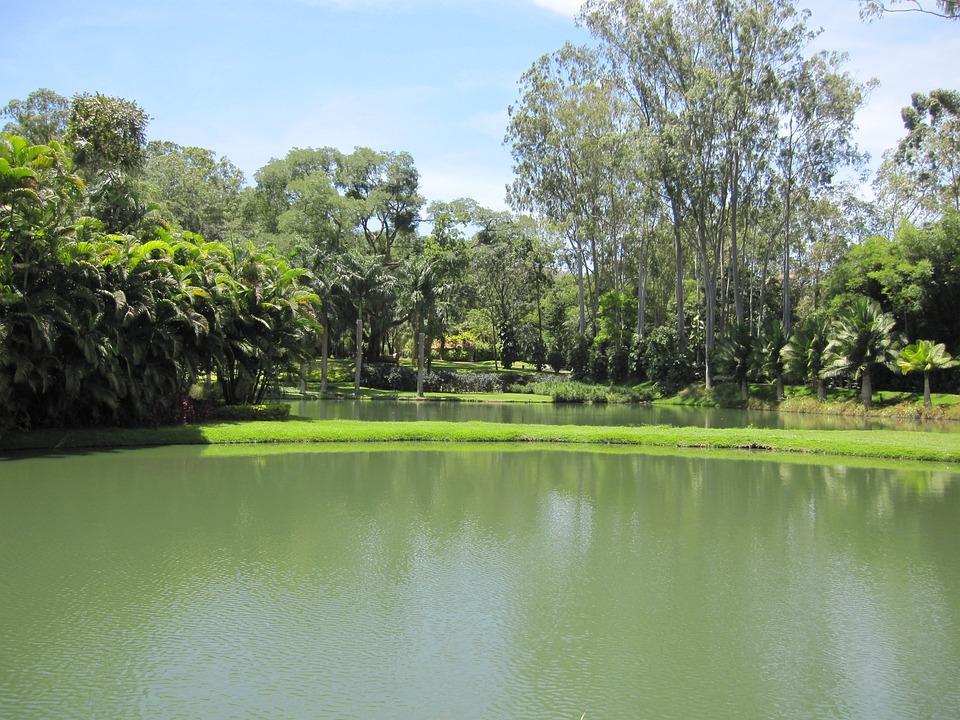 Tree, Lake, Brumadinho, Mg
