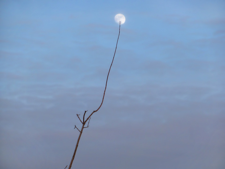 Moon, Brunch, Dusk, Blue Hour, Evening, Sky, Clouds