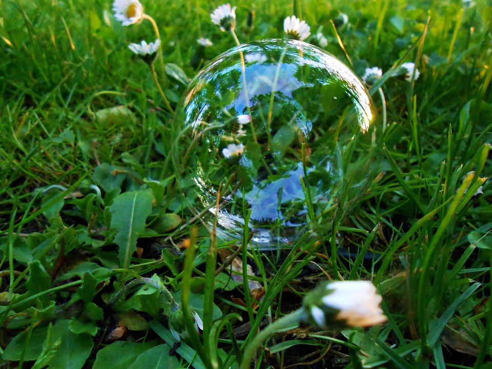 Grass, Daisy, Daisies, Foliage, Straws, Bubble, Small