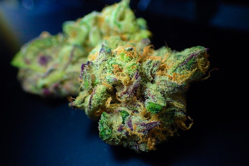 Bud, Cannabis, Close Up, Dope, Drug, Flower, Ganja