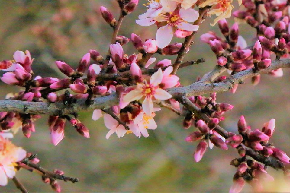 Flower, Bud, Spring, Tree, Nature, Pink, Color