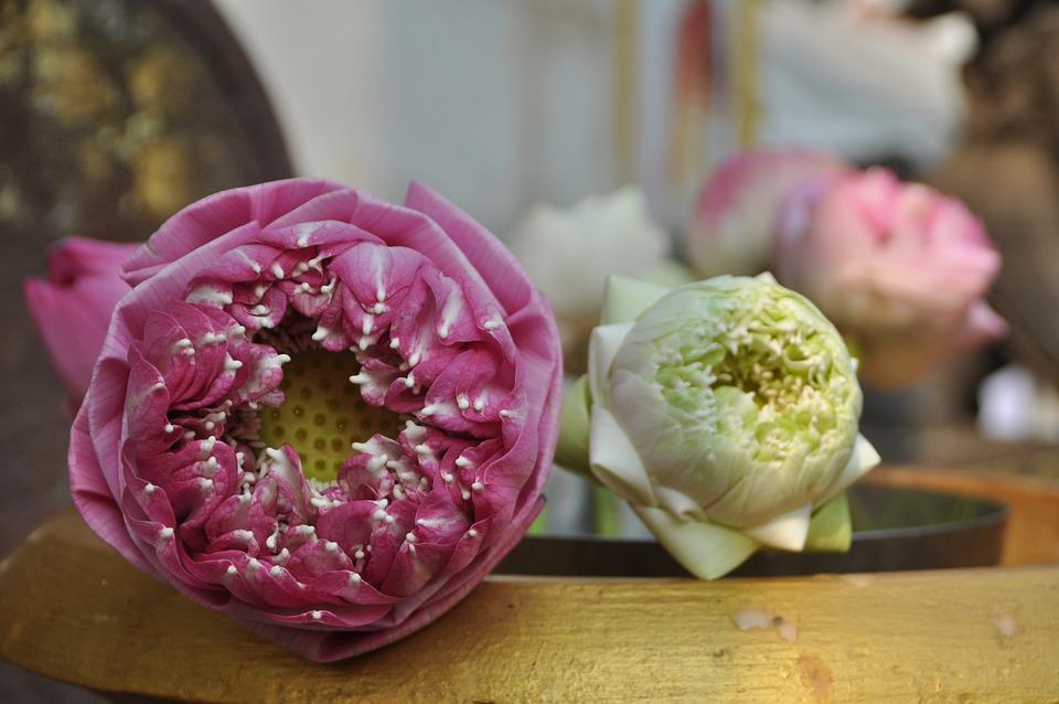 Lotus Blossom, Temple, Thailand, Buddhism
