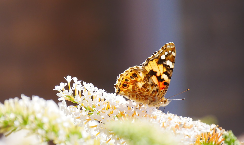 Butterfly, Butterflies, Nature, Bug, Animal, Wing