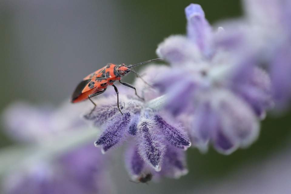 Beetle, Insect, Bug, Nature, Macro, Red, Spring