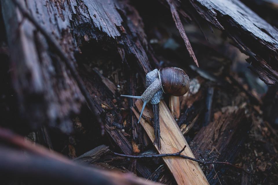 Nature, Animal, Brown, Bug, Closeup, Common, Crawling