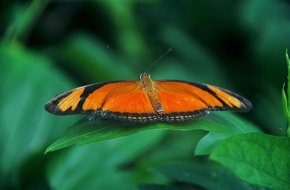 Common, Orange, Butterfly, Bug, Insect, Caterpillar