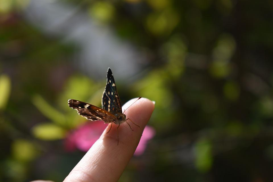 Finger, Butterfly, Insect, Bug, Natural