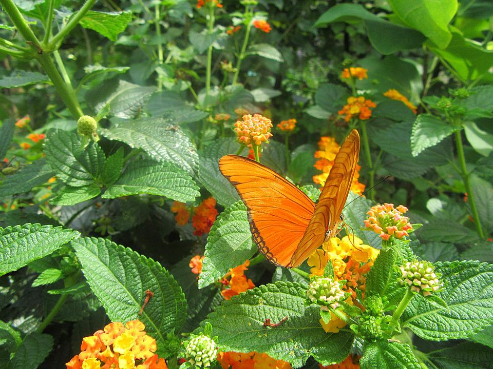 Orange Butterfly, Flower, Bug, Insects, Butterfly