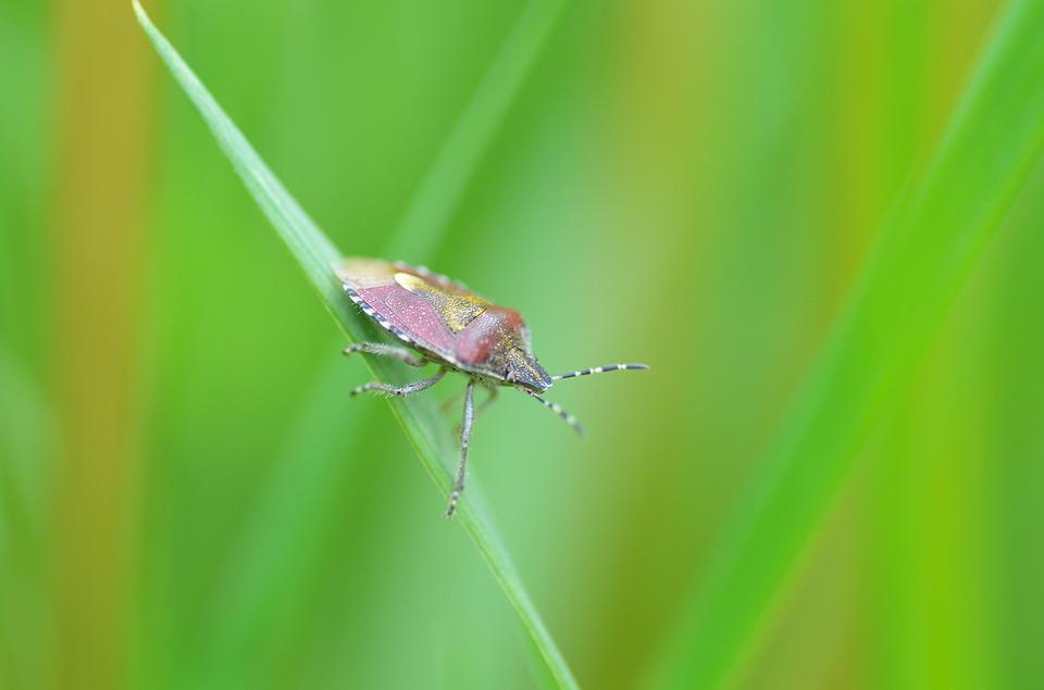 Beetle, Bug, Green, Sheet, Nature, Grass, Detail