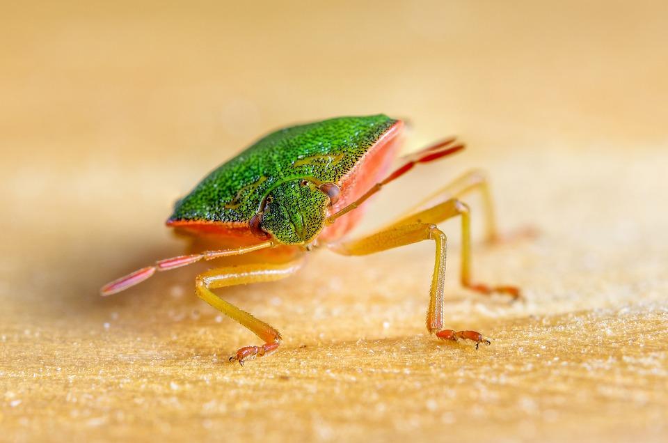 Bug, Insect, Eyes, Sense Organs, Animal World, Crawl