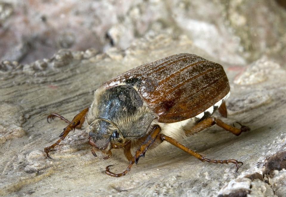 Bug, Insect, Macro, Close