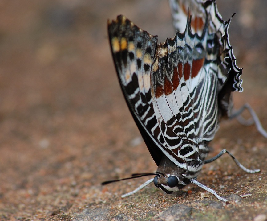 Macro, Butterfly, Insect, Wing, Wildlife, Bug, Bright