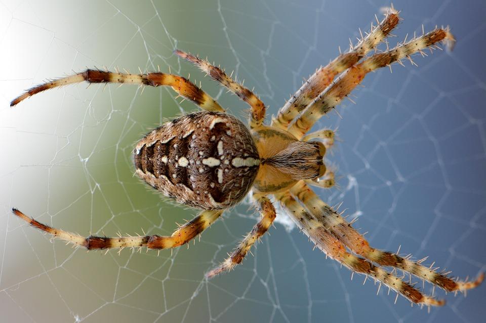 Spider, Web, Nature, Bug, Animal, Macro, Legs, Creepy