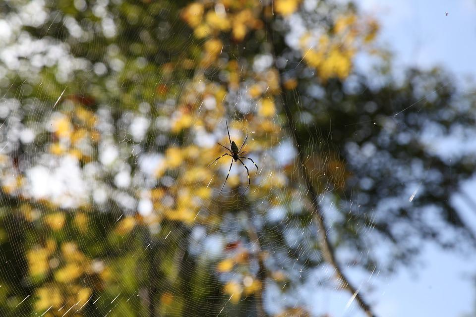 Spider, Nature, Insect, Bug, Fear