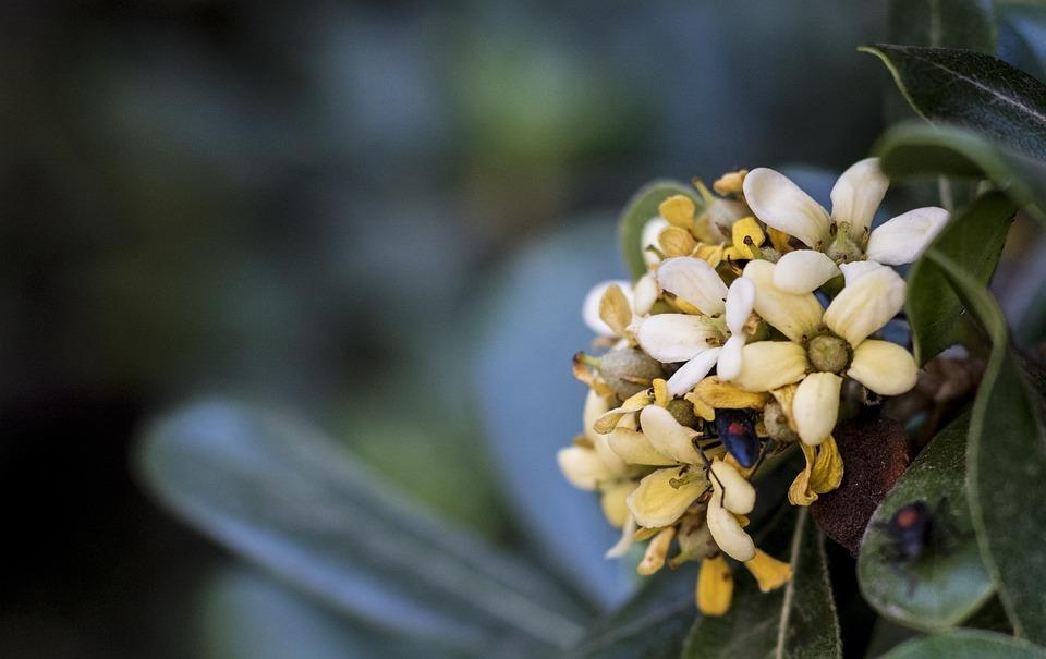 Flower, Green, Bug, Floral, Nature, Spring, Plant