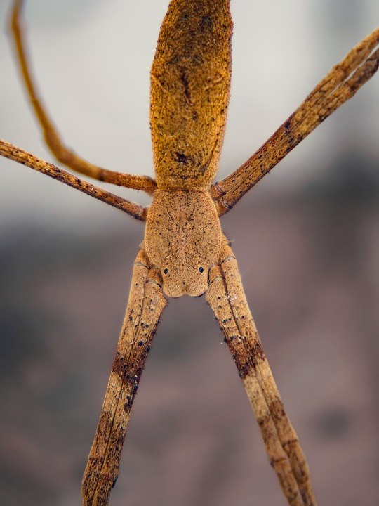 Spider, Stick, Eyes, Bug, Torso, Legs, Scary, Nature