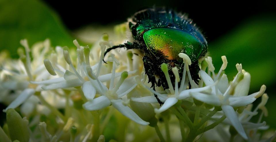 Bug, Shiny, Flower, White, Insect, Animal, Wildlife
