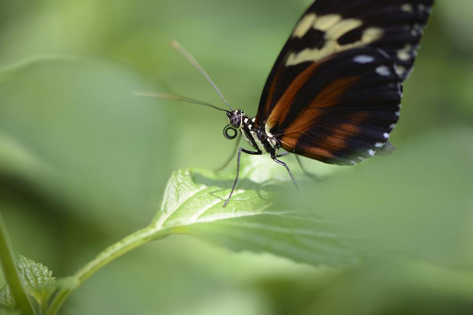 Butterfly, Wing, Insect, Bug, Nature, Green Nature