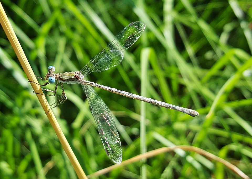 Damselfly, Insect, Insectoid, Winged, Bug, Bokeh