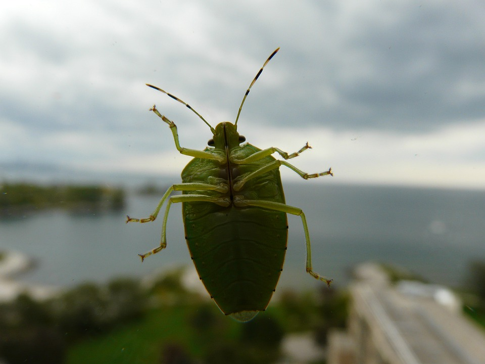 Green Bug, Bug, Beetle, Insect, Bugs, Green Beetle
