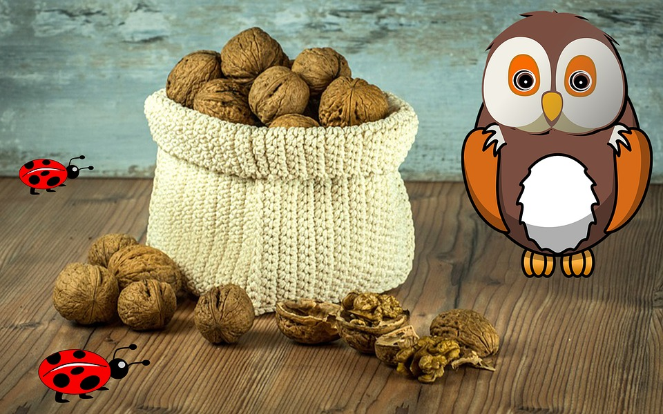 Owl, Walnuts, Nut, Bugs, Animals, Insect, Nature