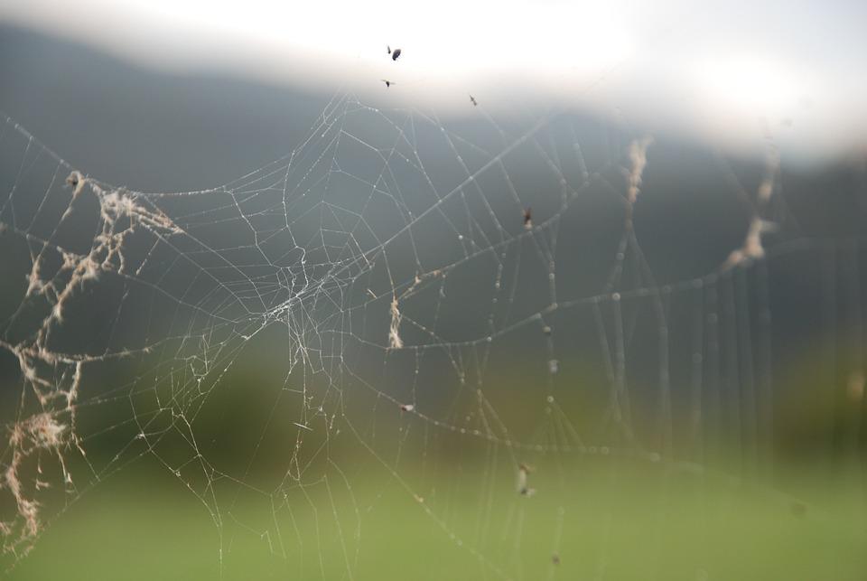 Cobweb, Spider, Nature, Arachnophobia, Bugs, Network