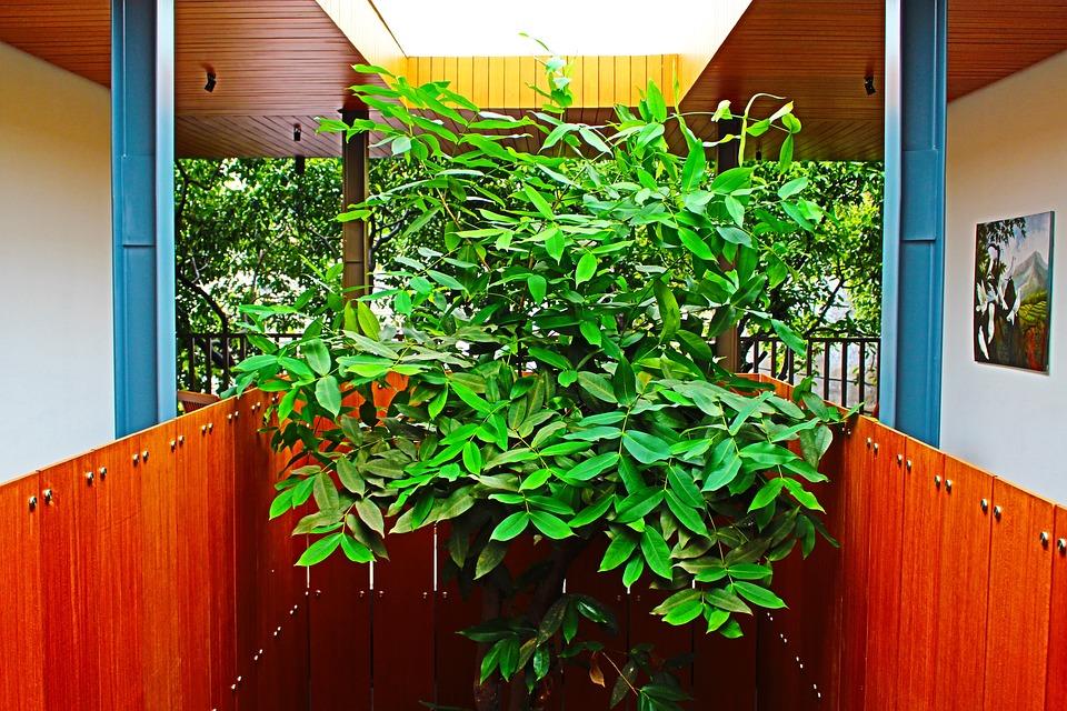 Building, Indoor Plant, Interior, Tree, Organic