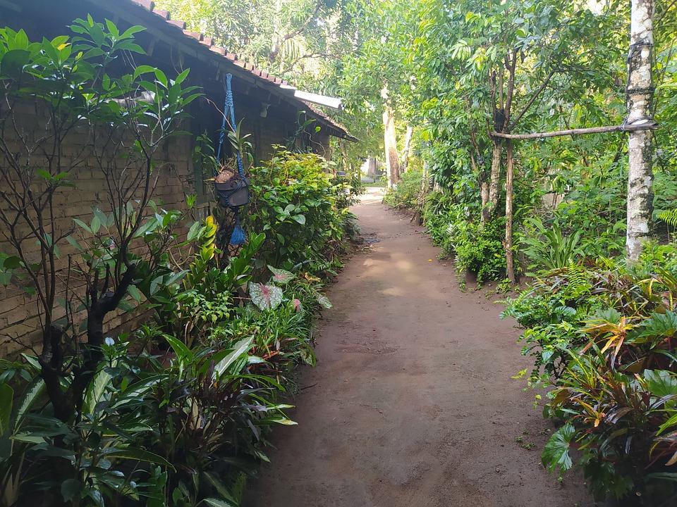 Family Garden, Old Home, Neighborhood, Building